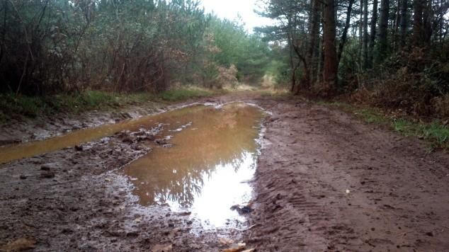 Chemin forestier de la Baraque des Pins