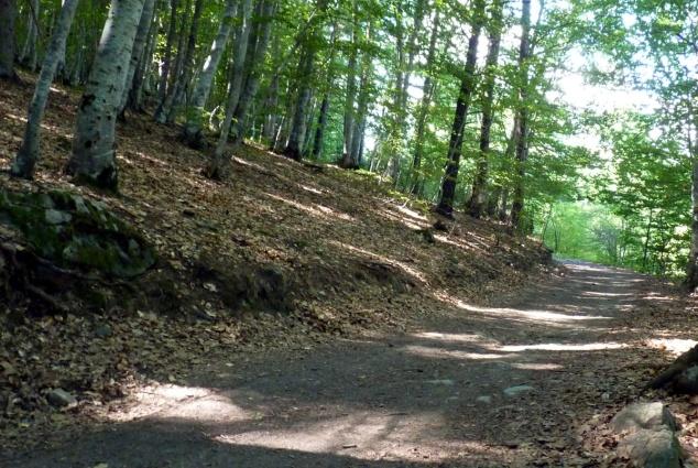 Chemin du lac de St-Léger