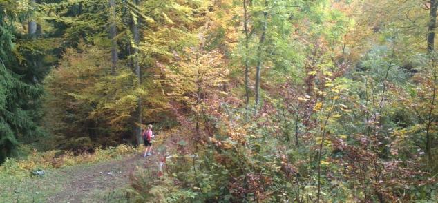 Retour au village par la piste forestière qui traverse le sous-bois
